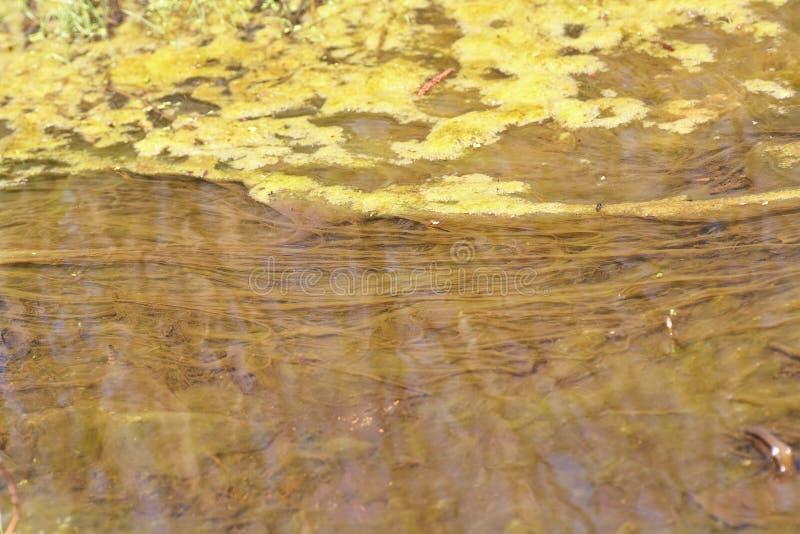 Grüne und orange Algen auf dem Fluss Verunreinigung der Umgebung lizenzfreies stockbild