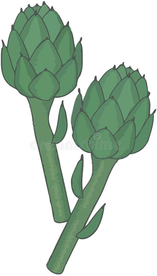 Grüne und reife geschnittene Artischocke lizenzfreie abbildung