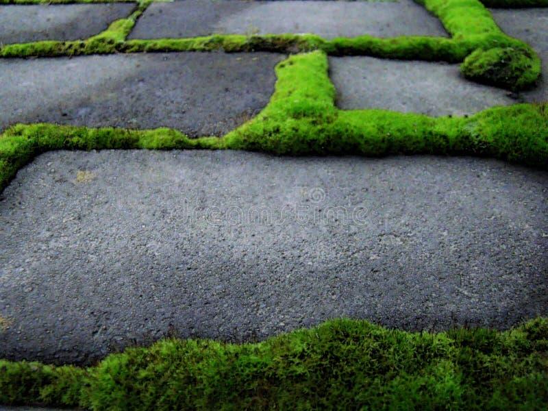 Grüne Vegetation wuchs um graue Ziegelsteine lizenzfreies stockbild