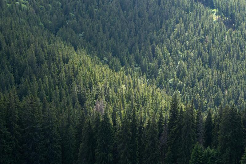 Grüne Waldlandschaft lizenzfreies stockfoto
