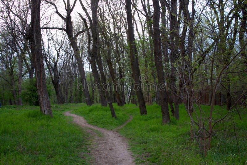 Grüne Waldung stockbild