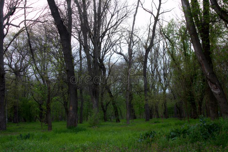 Grüne Waldung lizenzfreies stockfoto