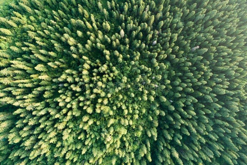 Grüne Waldvogelperspektive stockbilder
