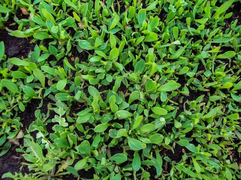 grüne Weide von oben Abschluss oben lizenzfreies stockbild
