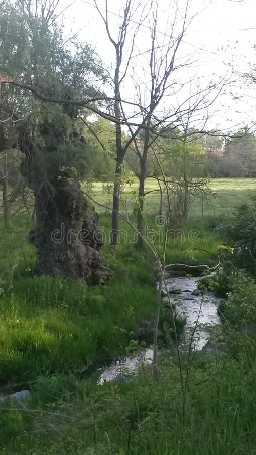 Grüne Weiden der Schönheit lizenzfreies stockbild
