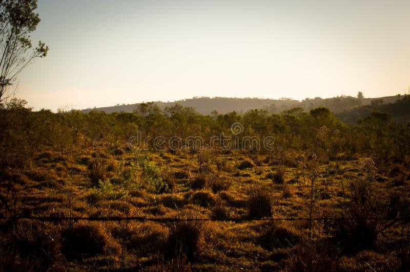 Grüne Welt und seine Schönheit, die Luft in Reinheit umwandelnd lizenzfreie stockfotografie