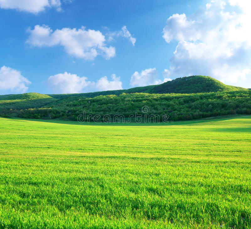 Grüne Wiese im Berg stockfotografie