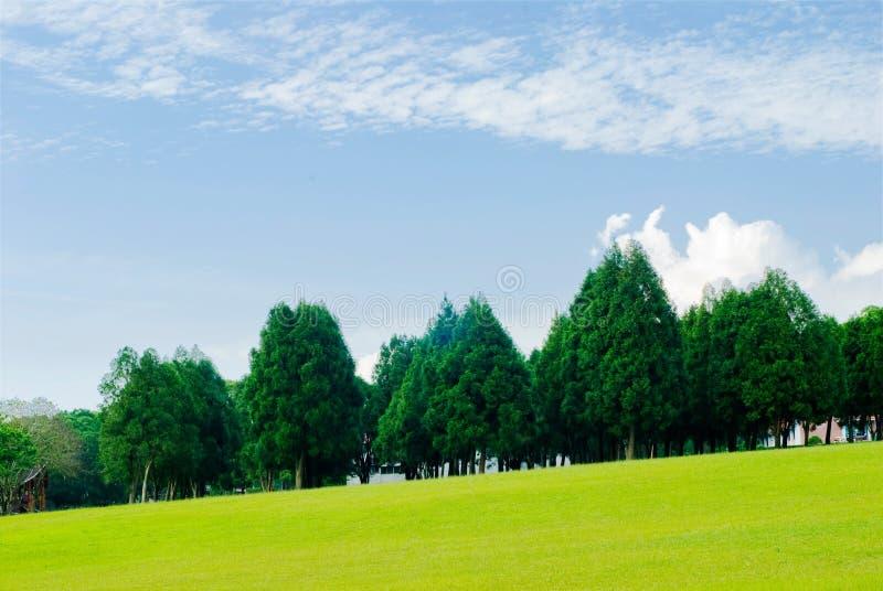 Grüne Wiese, Kiefer unter blauem Himmel stockbild