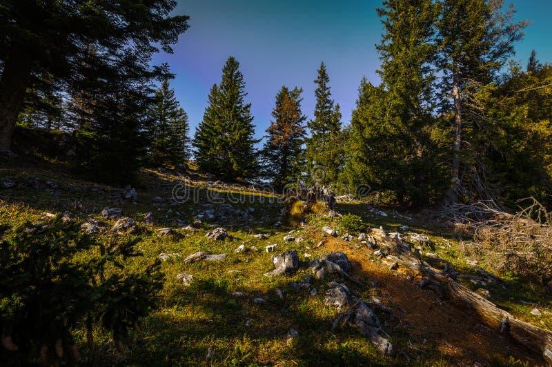 Grüne Wiese mit Gras und kleine Felsen auf die Oberseite von Stadelwand-Spitze, auf dem Weg zur Spitze von Schneeberg stockfotografie