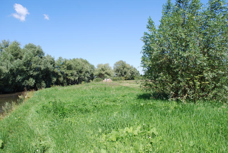 Grüne Wiese in seinem Charme stockbilder