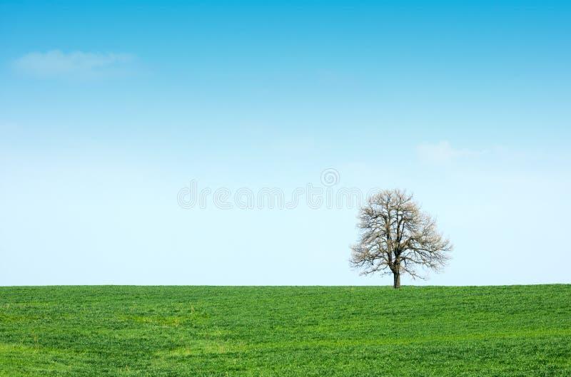 Grüne Wiese und Baum des Frühlinges stockfotografie