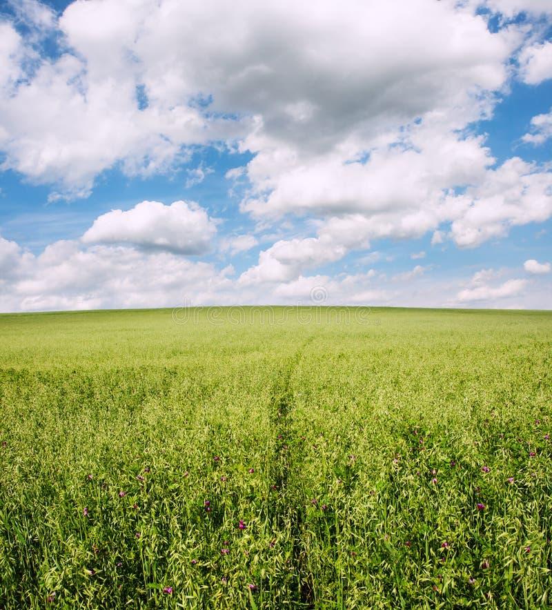 Grüne Wiese unter blauem Himmel lizenzfreie stockbilder