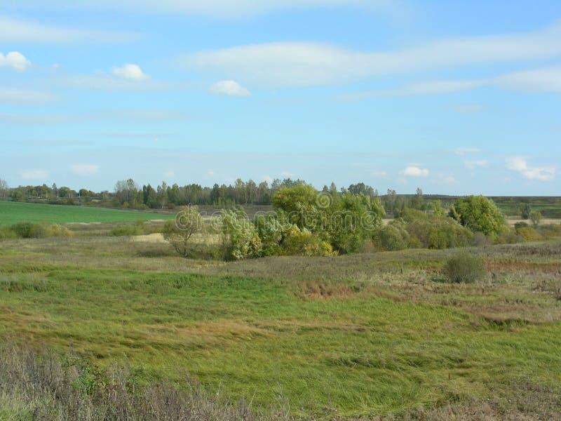 Grüne Wiesen in der Landschaft, der Wind beeinflußt das Gras und die Niederlassungen der Bäume lizenzfreie stockfotos