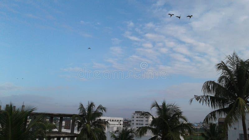 3 grüne wilde indische Papageien, die in den Himmel fliegen stockbild