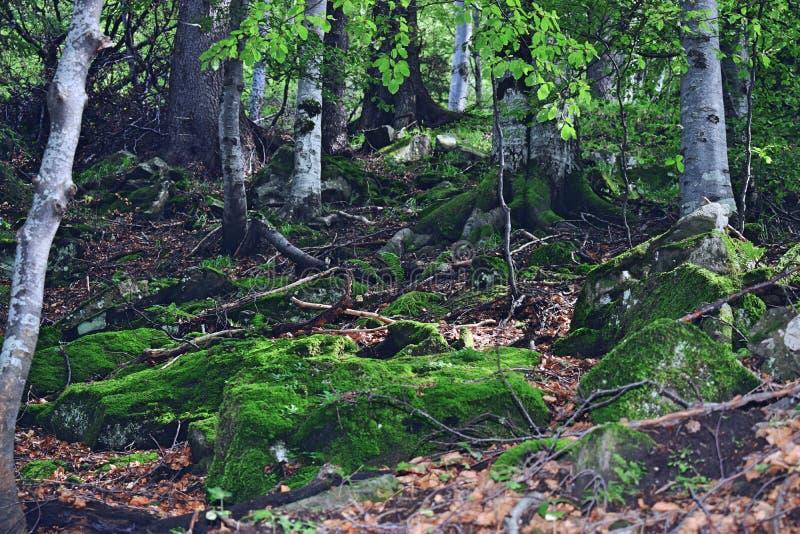 Grüne Wurzeln lizenzfreie stockbilder