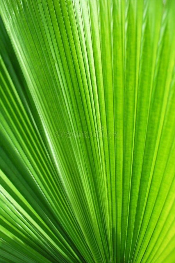 Grüne Zeilen stockfotos