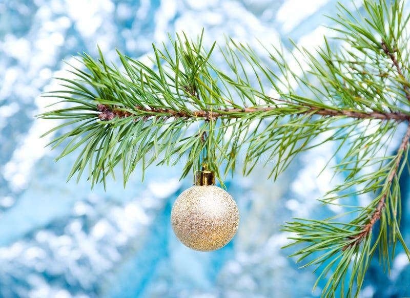 Grüne Zweige des pine.christmas stockbild