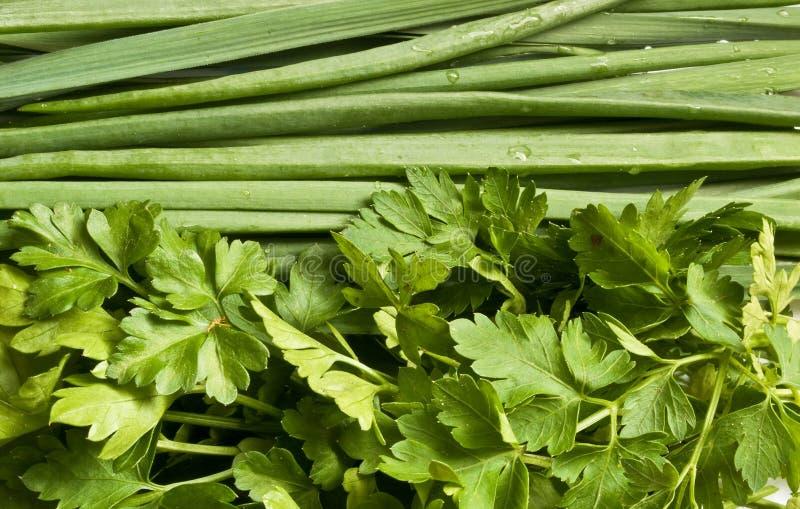 Grüne Zwiebeln, grüner Knoblauch und Petersilie lizenzfreie stockfotos