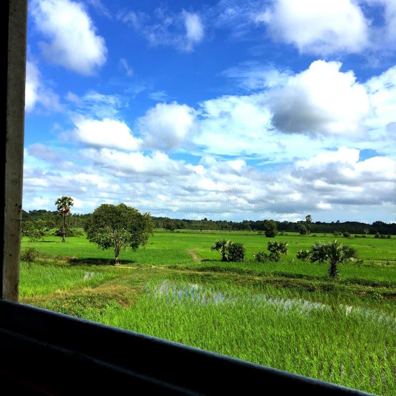Grünen Sie Getreidefeld stockbild