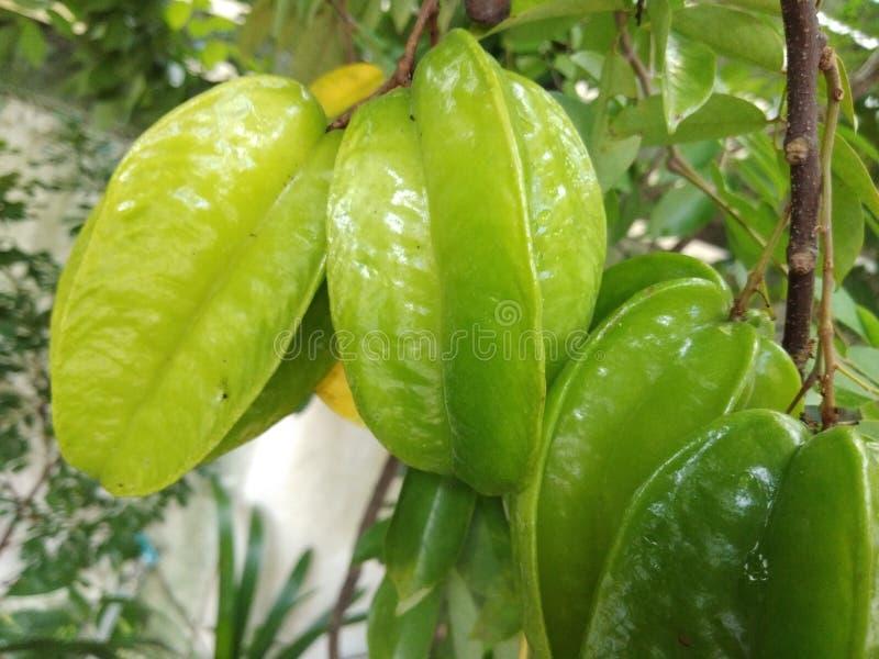 Grünen Sie Sternfrucht lizenzfreie stockbilder