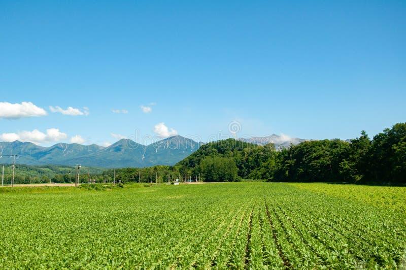 Grüner Agrobetrieb mit Berg- und Blauhimmel stockbild