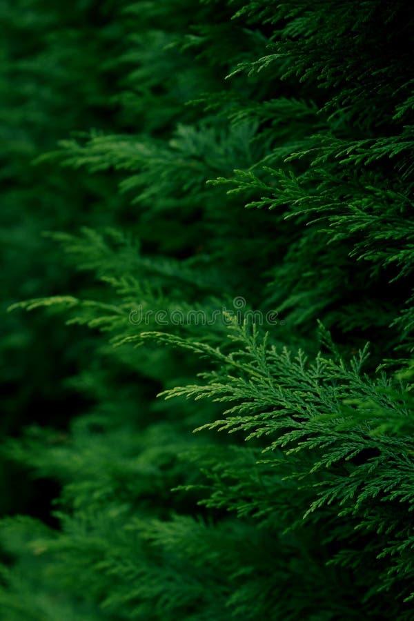 Grüner als Grün stockbilder