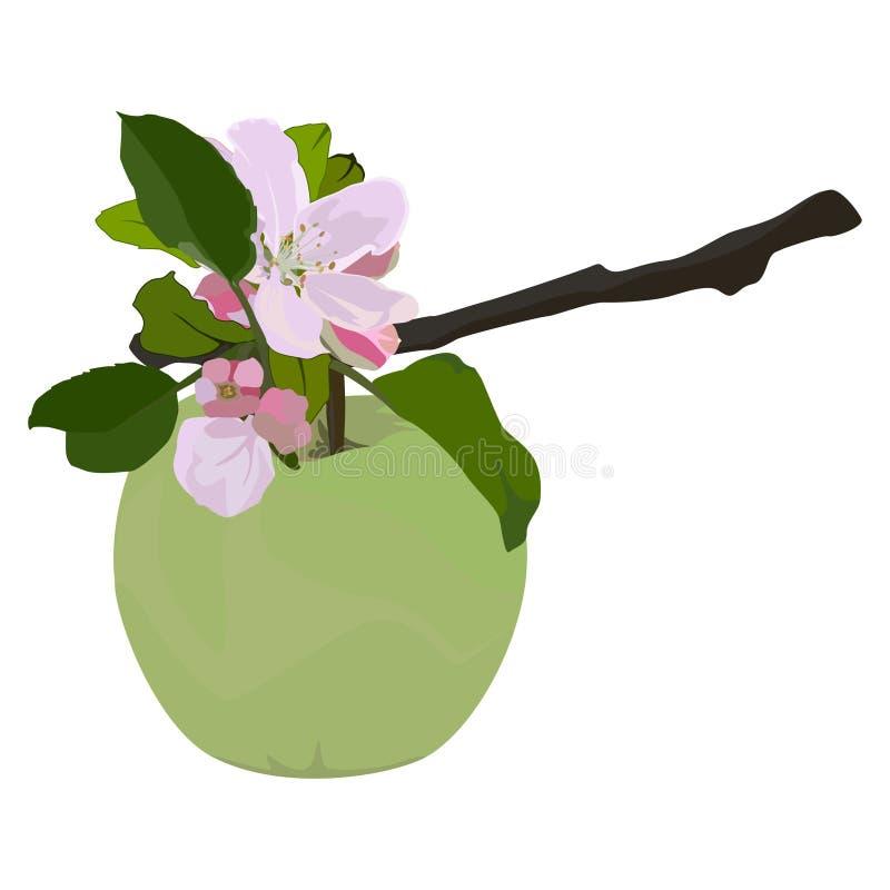 Grüner Apfel und Niederlassung in der Blüte, flache lokalisierte Illustration des Vektors stock abbildung