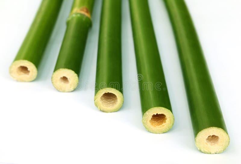 Grüner Bambus über weißem Hintergrund lizenzfreie stockbilder