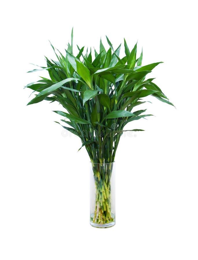 Grüner Bambus in einem Glasvase stockfotos