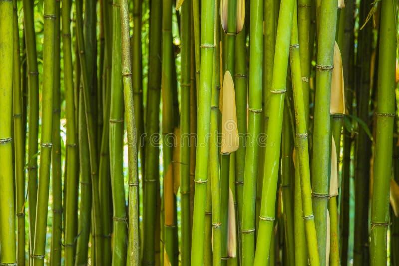 grüner Bambushintergrund stockfoto