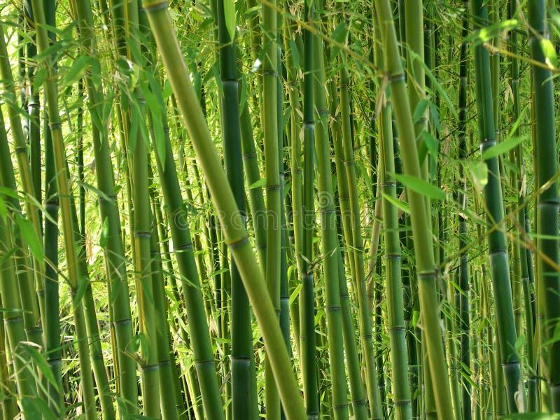 Grüner Bambuswald stockbilder