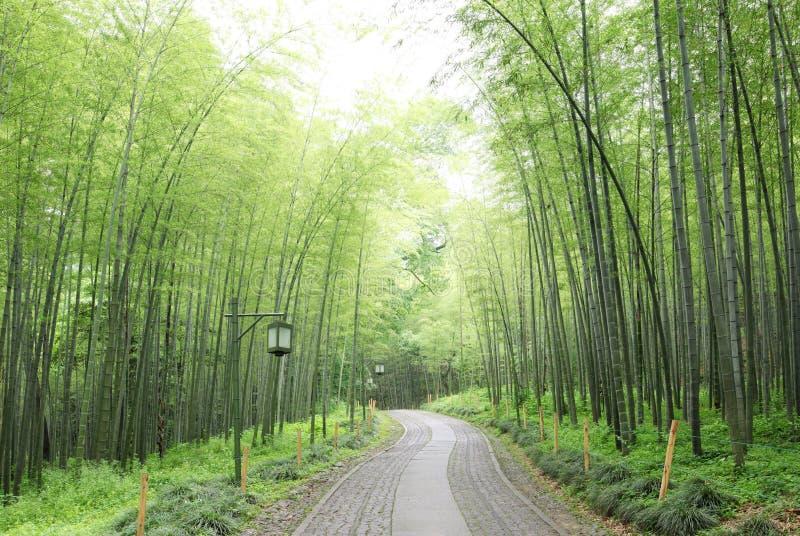Grüner Bambuswald lizenzfreie stockfotos