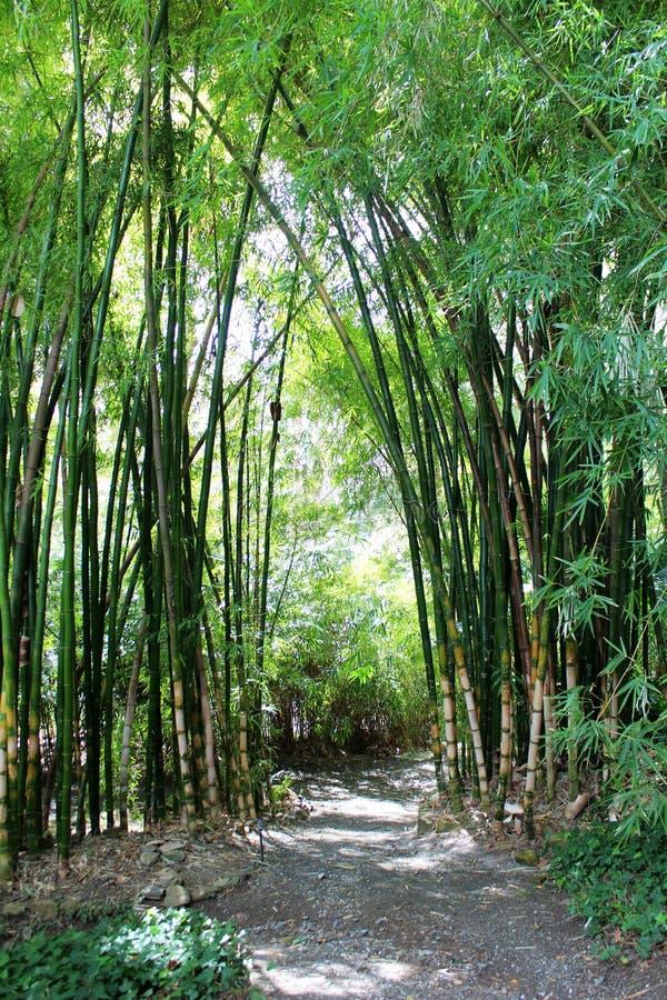 Grüner Bambuswald lizenzfreies stockbild
