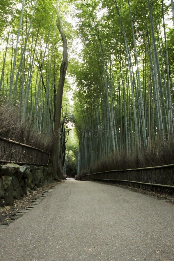 Grüner Bambuswald in Arashiyama, Japan stockfotografie