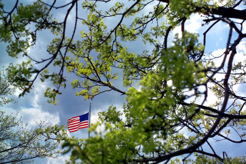 Grüner Baum lizenzfreie stockfotografie