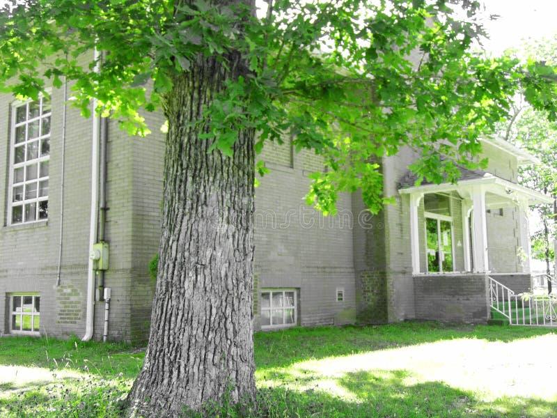 Grüner Baum außerhalb des Hauses stockfotos