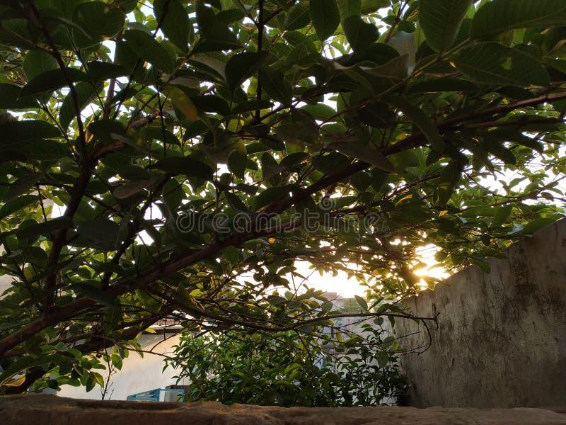 Grüner Baum, der das nature& x27 darstellt; s-Schönheit lizenzfreies stockbild