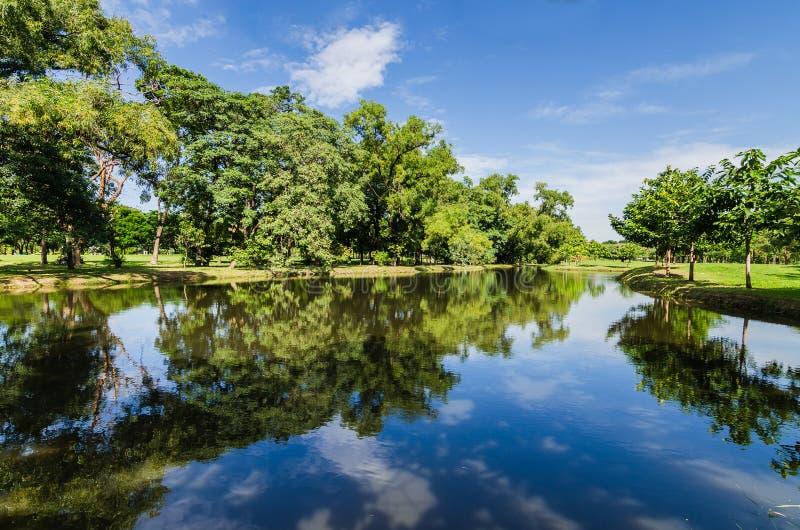 Grüner Baum im Park mit Reflexion stockbild