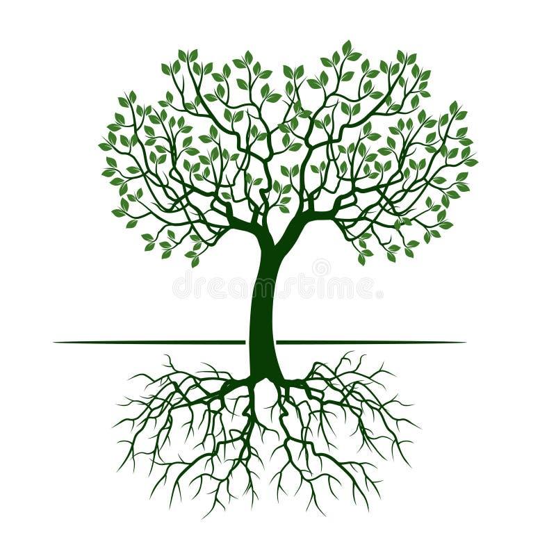 Grüner Baum mit Blättern und Wurzeln lizenzfreie abbildung