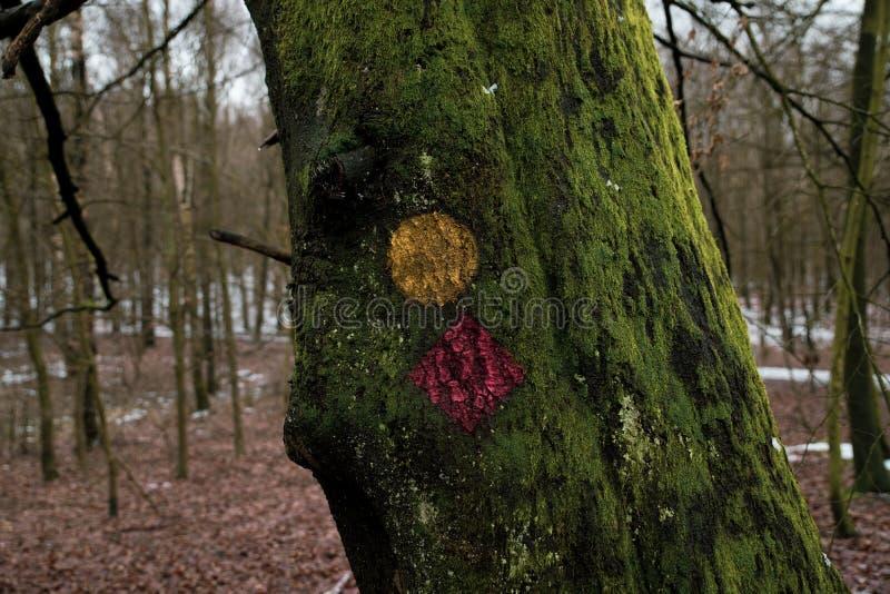 Grüner Baum mit Trekkingszeichen stockbilder