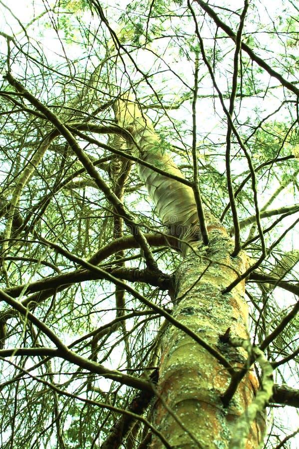 Grüner Baum und Himmel lizenzfreie stockfotografie