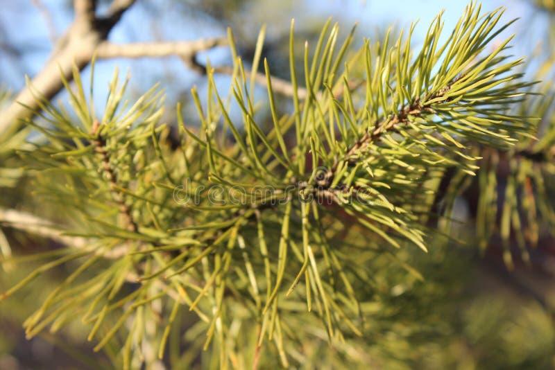 Grüner Baumast auf dem Hintergrundwald und dem blauen Himmel stockbilder