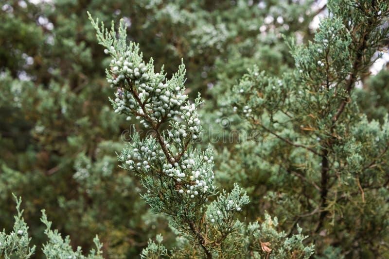 Grüner Baumast in einem botanischen Garten stockfoto