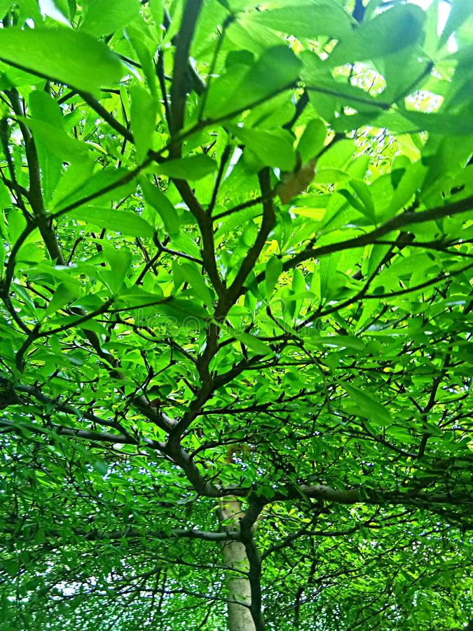 Grüner Baumhintergrund stockbild