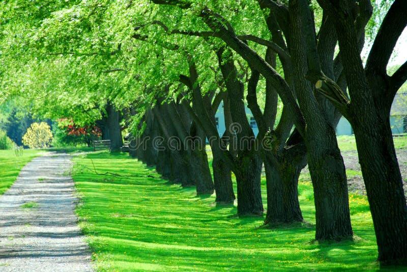 Grüner Baumweg stockbilder