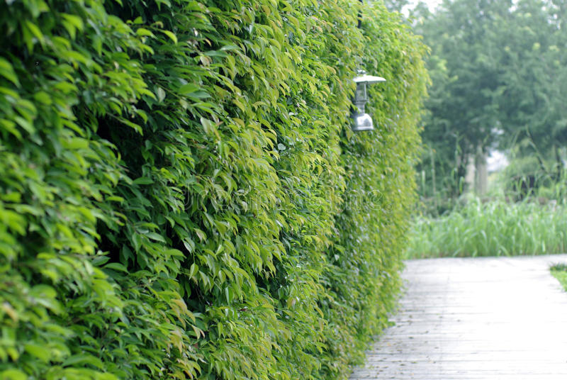 Grüner Baumzaun mit klassischer Lampe stockfotos