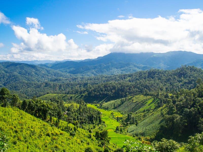 Grüner Berg mit blauem Himmel stockfotografie