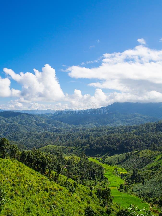 Grüner Berg mit blauem Himmel lizenzfreie stockbilder