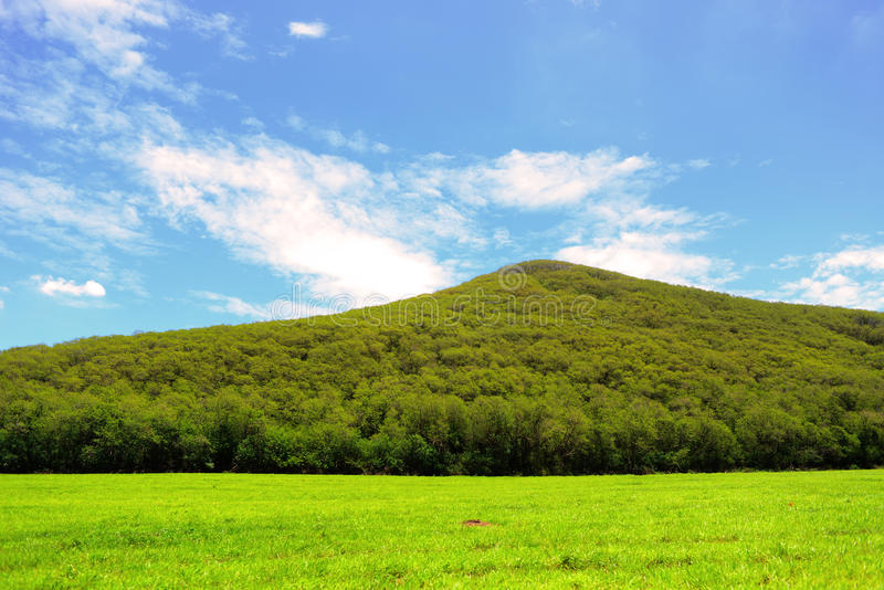 Grüner Berg mit blauem Himmel stockbild