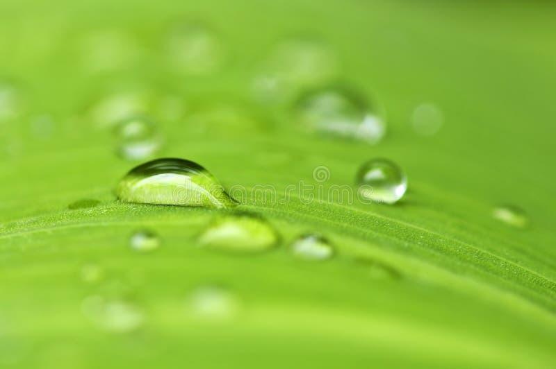 Grüner Blathintergrund mit Regentropfen stockbild